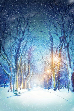 Lee Avison tree lined avenue in a park with snow in winter