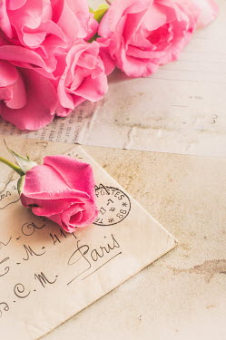 Jane Morley PINK ROSES ON LETTERS Flowers