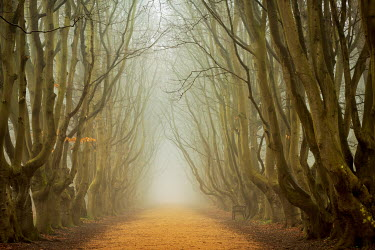 Lars van de Goor TREE LINED PATH Trees/Forest