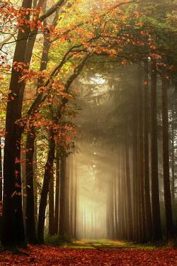 Lars van de Goor EMPTY SUNLIT AUTUMN FOREST Trees/Forest