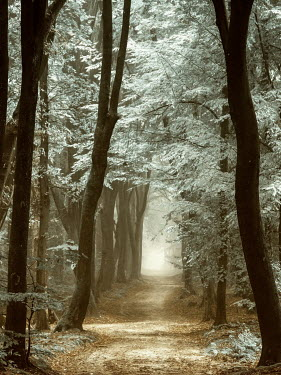 Lars van de Goor TREE LINED PATH Paths/Tracks