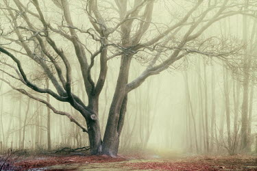 Lars van de Goor TREE IN MIST Trees/Forest