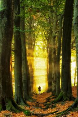 Lars van de Goor WOMAN WALKING IN SUNLIT FOREST Women