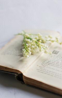 Jill Ferry WHITE FLOWERS ON OPEN BOOK Miscellaneous Objects