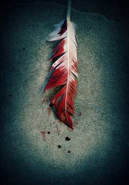 Lyn Randle BLOOD STAINED FEATHER Miscellaneous Objects