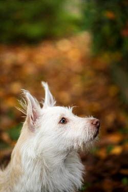 Jean Ladzinski CUTE WHITE LITTLE DOG OUTDOORS Animals