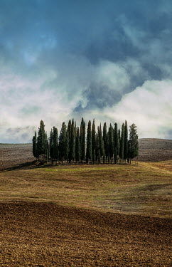 Jaroslaw Blaminsky CYPRESS TREES IN ITALIAN LANDSCAPE Trees/Forest