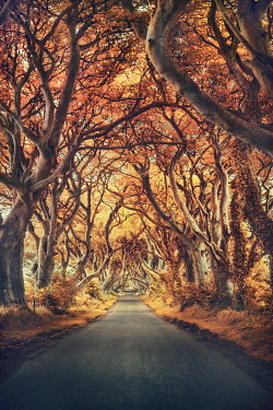 Evelina Kremsdorf AUTUMN TREES WITH EMPTY ROAD Roads