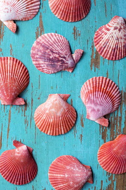 Susan Fox PINK SHELLS ON TURQUOISE WOOD Miscellaneous Objects
