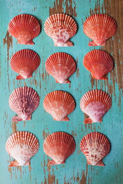 Susan Fox ORANGE SEASHELLS ON TURQUOISE TABLE Miscellaneous Objects