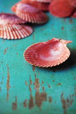 Susan Fox PINK SEASHELLS ON TURQUOISE TABLE Miscellaneous Objects