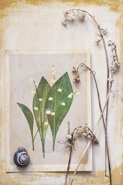 Magdalena Wasiczek DRIED FLOWERS WITH ILLUSTRATION AND SHELL Flowers