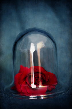Alison Archinuk RED ROSE UNDER GLASS DOME Miscellaneous Objects