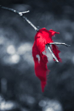 Magdalena Russocka red fabric hanging on branch Miscellaneous Objects