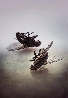 Jaroslaw Blaminsky DEAD FLIES Insects