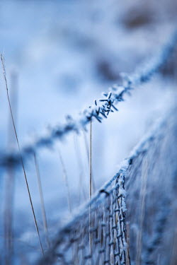 Richard Nixon FROZEN BARBED WIRE FENCE IN THE SNOW Snow/ Ice