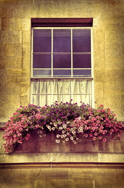 Jill Battaglia WINDOW OF HISTORICAL HOUSE WITH FLOWERS Building Detail