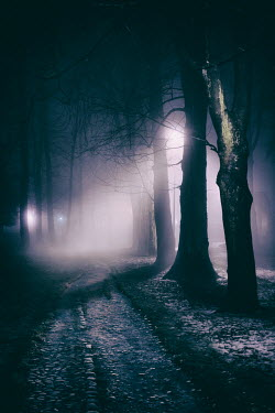 Lee Avison EMPTY PATH IN FOREST AT NIGHT Paths/Tracks