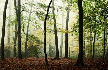 Manuela Deigert EMPTY FOREST WITH TREES IN LEAF Trees/Forest