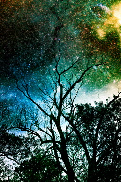 Valentino Sani TREES AND STARRY SKY Trees/Forest