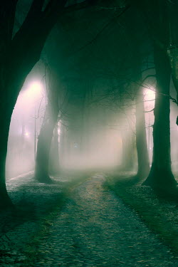 Lee Avison avenue of trees in winter fog