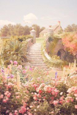 Victoria Davies GARDEN STEPS WITH FLOWERS IN SUMMER Stairs/Steps