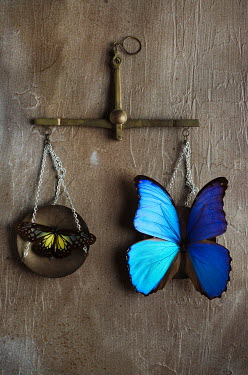Cristina Mitchell ANTIQUE SCALES WITH TWO BUTTERFLIES Insects