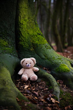 Maria Petkova TEDDY BEAR SITTING BY MOSSY TREE Miscellaneous Objects