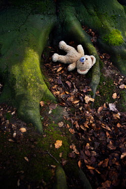 Maria Petkova TEDDY BEAR BY TREE FROM ABOVE Miscellaneous Objects