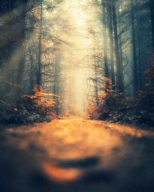 David Keochkerian COUNTRY PATH IN SUNLIT FOREST Paths/Tracks