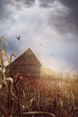 Drunaa Cabin in corn field