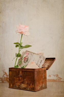 Magdalena Wasiczek BOX WITH PINK ROSE AND LETTERS Flowers