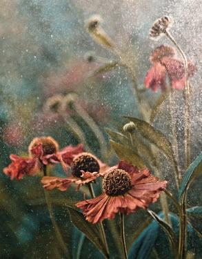 Magdalena Wasiczek PINK WILD FLOWERS Flowers/Plants