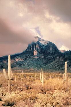 Jill Battaglia MISTY MOUNTAIN IN DESERT WITH CACTI Rocks/Mountains