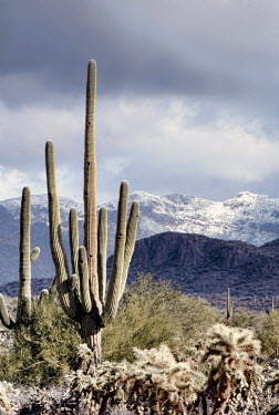 Jill Battaglia Winter in the desert of Arizona Desert