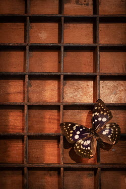 Peter Chadwick BUTTERFLY ON WOODEN BOX FROM ABOVE Insects
