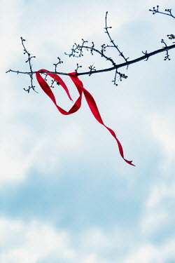Magdalena Russocka red ribbon hanging on branch in winter