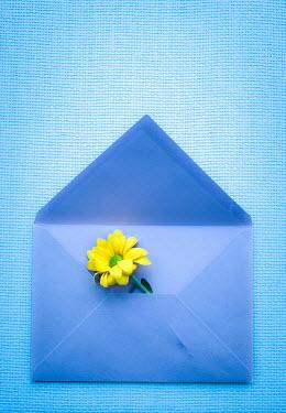 Jitka Saniova YELLOW FLOWER IN BLUE ENVELOPE Flowers