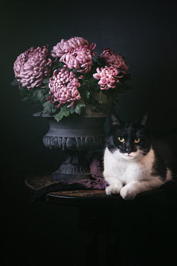 Magdalena Wasiczek FLOWERS IN URN WITH CAT ON TABLE Animals