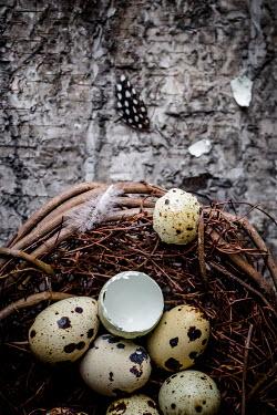 Des Panteva EGGS IN BIRDS NEST Miscellaneous Objects