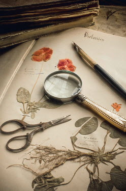 Jane Morley PRESSED FLOWERS MAGNIFYING GLASS SCISSORS AND PEN Miscellaneous Objects