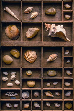 Jane Morley WOODEN BOXES WITH COLLECTION OF SHELLS Miscellaneous Objects