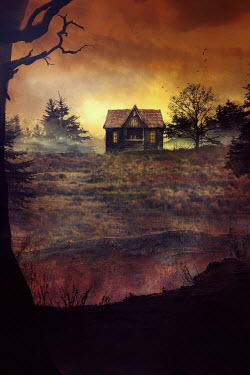 Drunaa cabin in the field