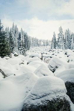 Svetlana Bekyarova FOREST COVERED IN SNOW Trees/Forest