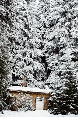 Svetlana Bekyarova CABIN IN SNOW COVERED FOREST Houses