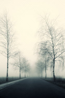 Carmen Spitznagel FOGGY TREELINED ROAD Roads