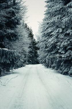Svetlana Bekyarova SNOW COVERED FOREST ROAD Trees/Forest