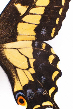 Aleah Ford CLOSE UP OF BUTTERFLY WING Insects