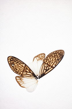 Aleah Ford INSECT WINGS Insects