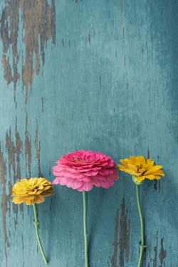 Susan Fox three colourful flowers on blue wood Flowers